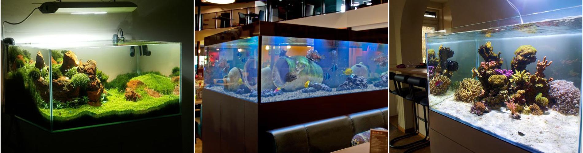 installationd'aquarium