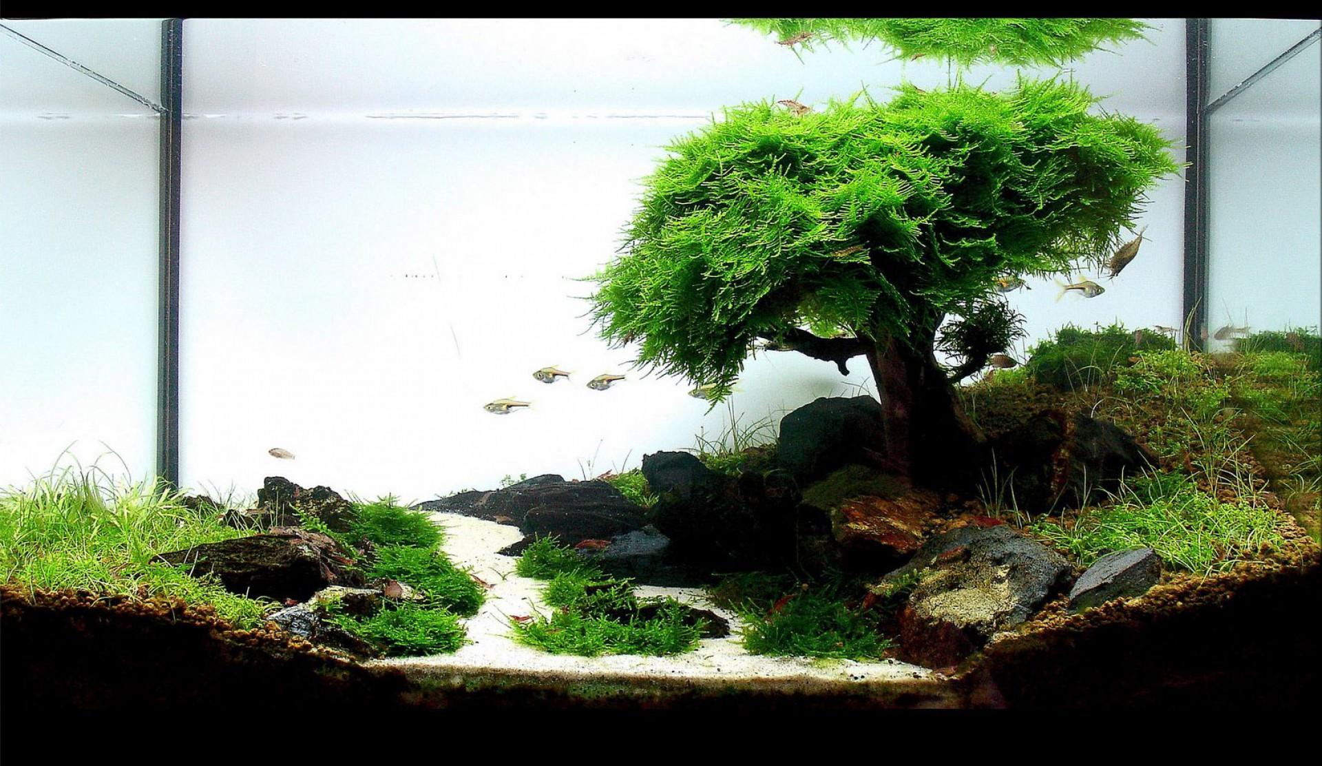 Iwagumi bonsai - Romain Lourme
