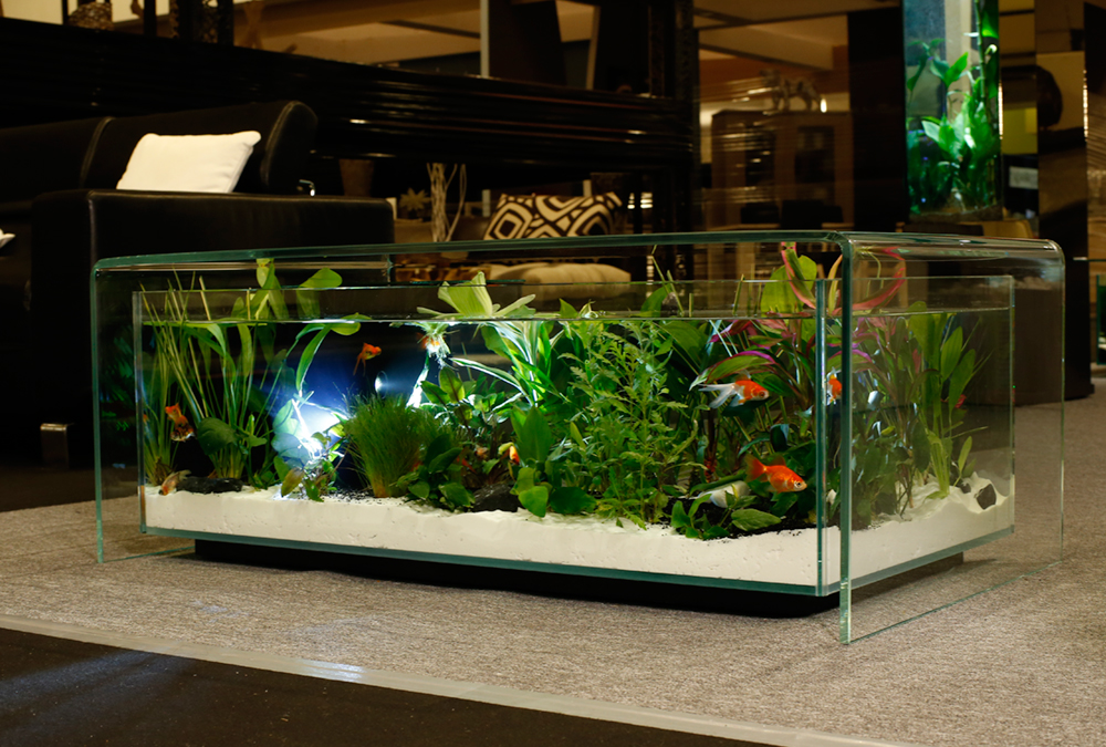 Table de salon aquarium romain lourme for Table salon aquarium