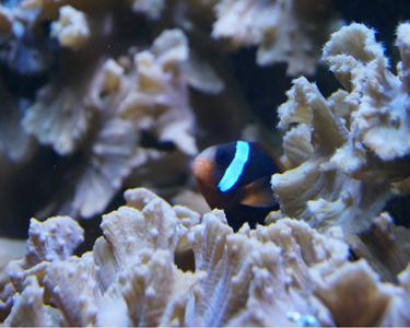 Le monde du récif corallien