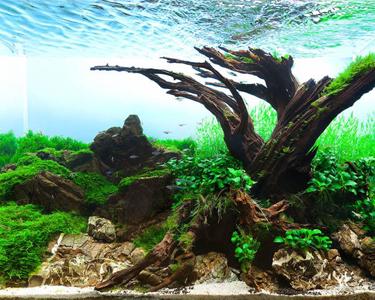 Le monde des paysages aquatiques