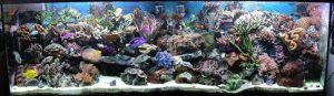 Aquarium adapté à la maintenace de chirurgien bleu