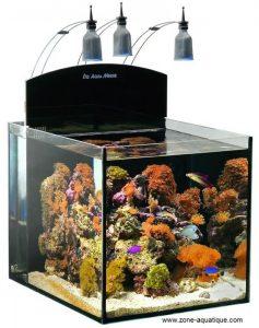 aquarium nano récifal